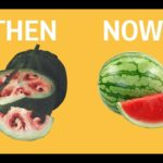 What fruits and vegetables looked like before we domesticated them