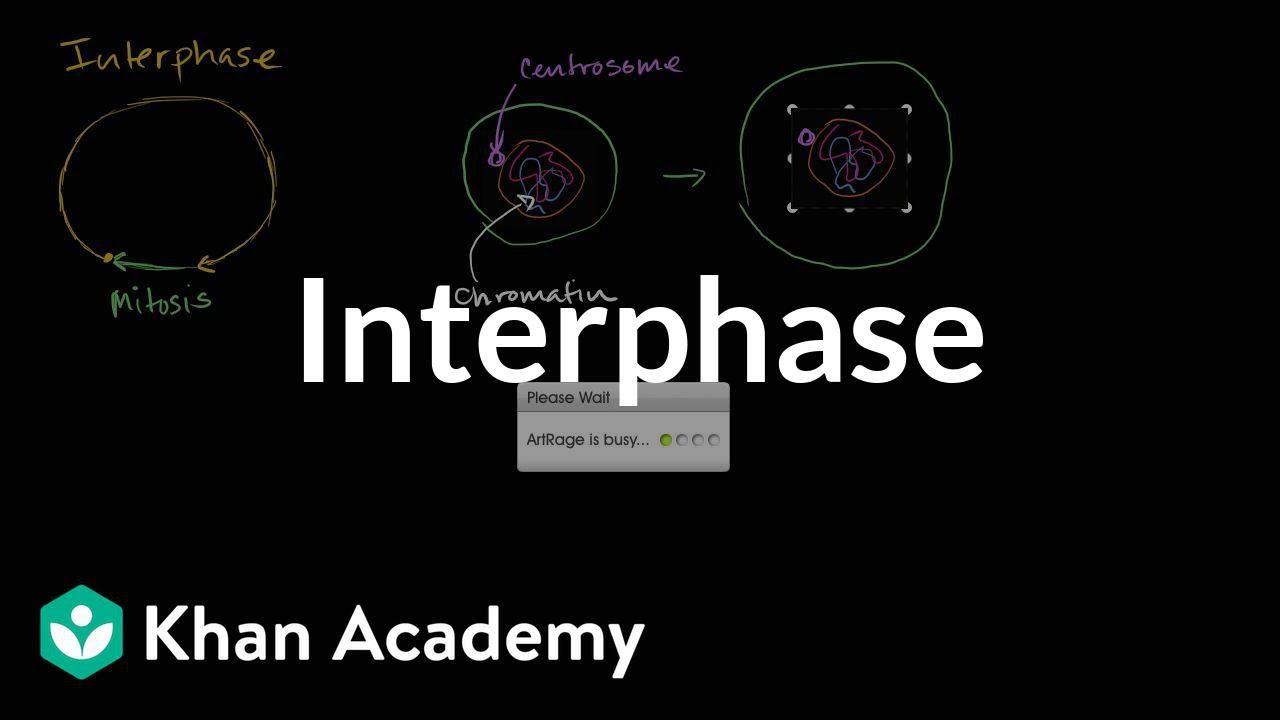 Interphase | Cells | MCAT | Khan Academy