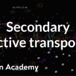 Electrochemical gradients and secondary active transport   Khan Academy