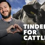 There's a New Version of Tinder Made Just for Cattle
