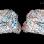 Amazing Brain Map Shows Where Words Are Stored in Your Noggin