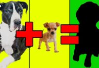 Top 20 Unbelievable Cute Cross Breed Dogs You'd Want To Own