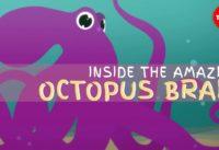 Why the octopus brain is so extraordinary - Cláudio L. Guerra