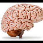 The Brain & Bipolar Disorder