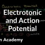 Electrotonic and action potentials | Human anatomy and physiology | Health & Medicine | Khan Academy