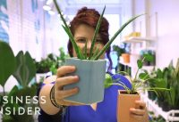 Why Millennials Are Obsessed With Plants