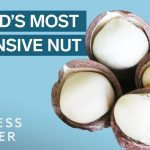 Why Macadamia Nuts Are So Expensive   So Expensive