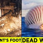 Alarming Discoveries You'll be Glad You Didn't Make