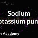 Sodium potassium pump   Membranes and transport   Biology   Khan Academy