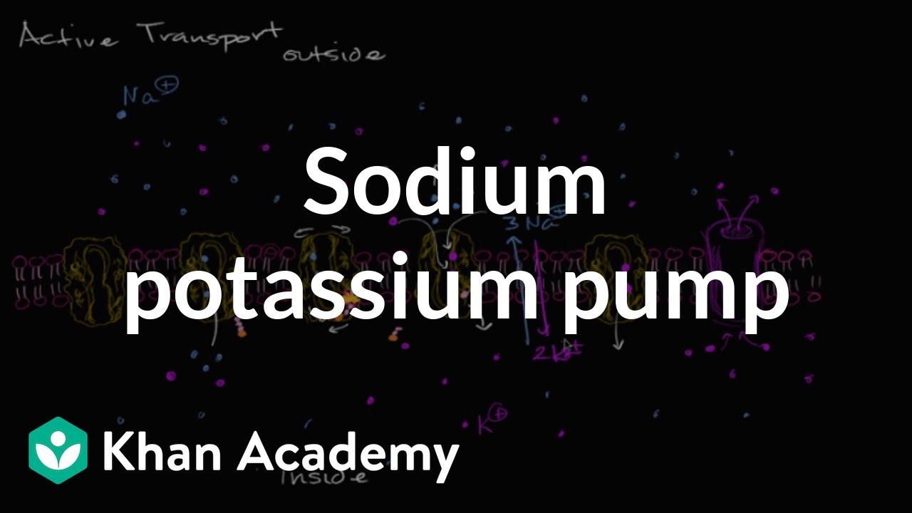 Sodium potassium pump | Membranes and transport | Biology | Khan Academy