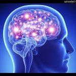 Human Brain (Audiobook)