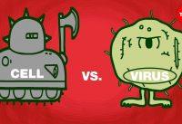Cell vs. virus: A battle for health - Shannon Stiles
