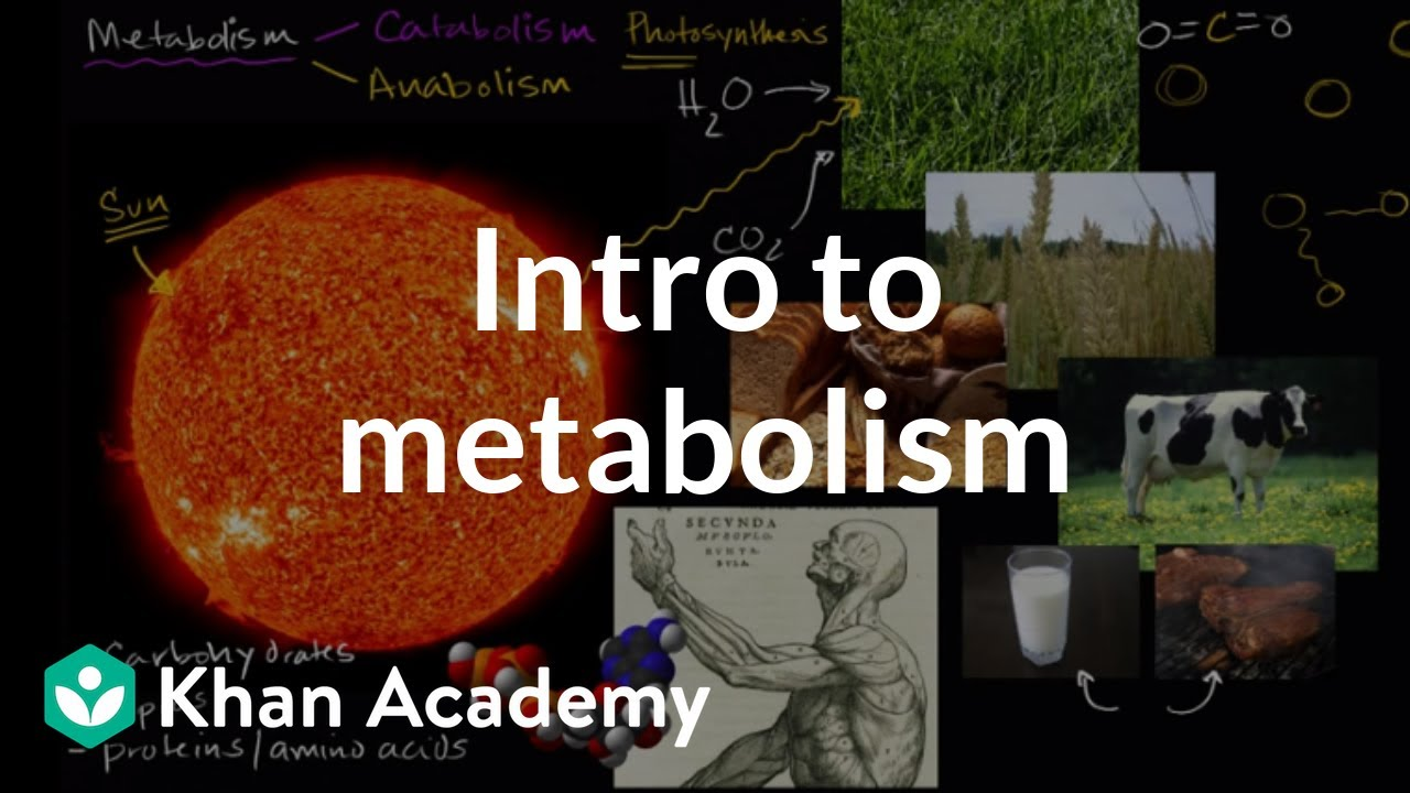Introduction to metabolism: anabolism and catabolism   Khan Academy