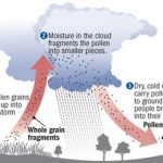 Thunderstorm Asthma overview